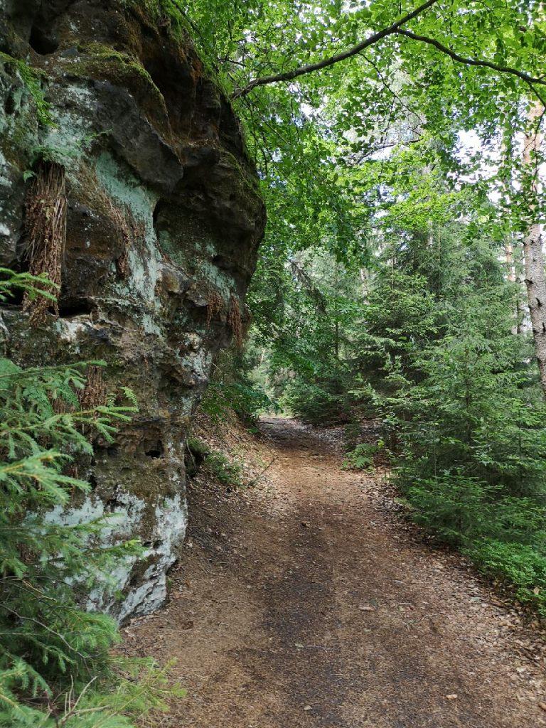 Felsen im Elbsandsteingebirge mit den Wabenwänden