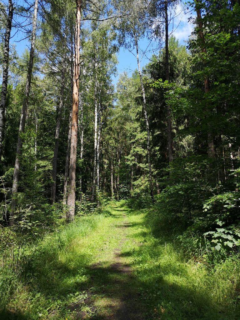 Durch den sächsischen Grenzwald