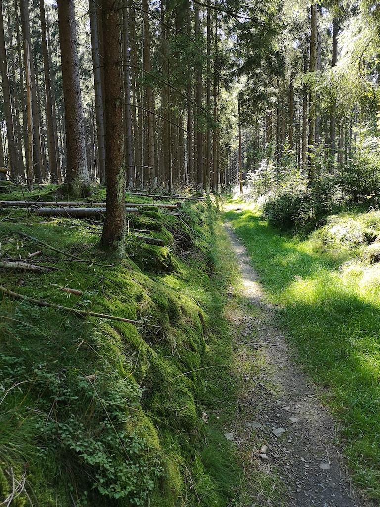 Auf schmalen Waldwegen laufen