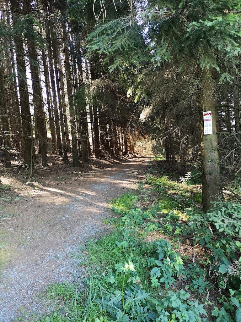 Frankenwaldsteig und fränkischer Gebirgsweg führen durch den schattigen Wald