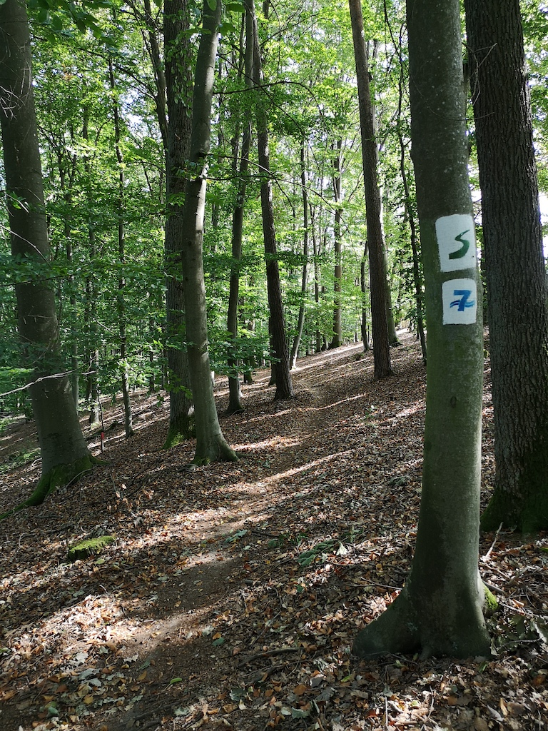 Weg am Steigerwaldpanoramaweg