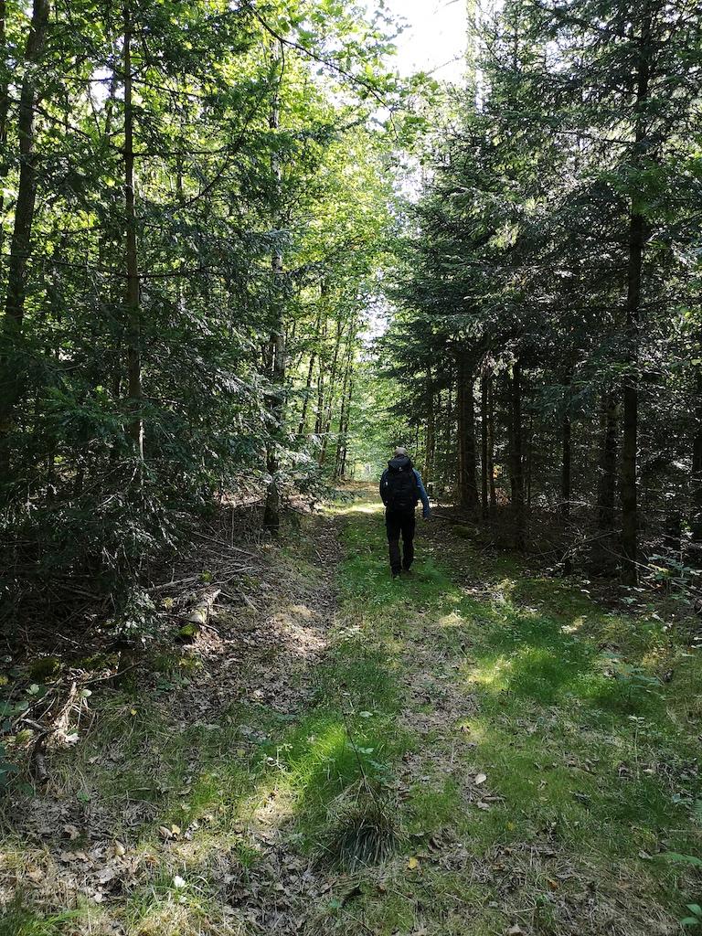 Im Schatten auf weichem Weg