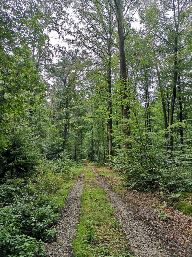 Forstweg nach Radstein