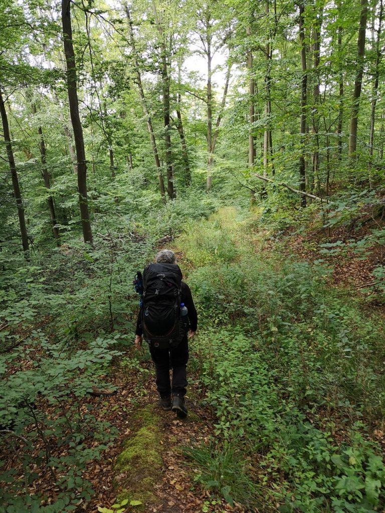 Schmaler Waldweg zum Trekkingplatz Hainach
