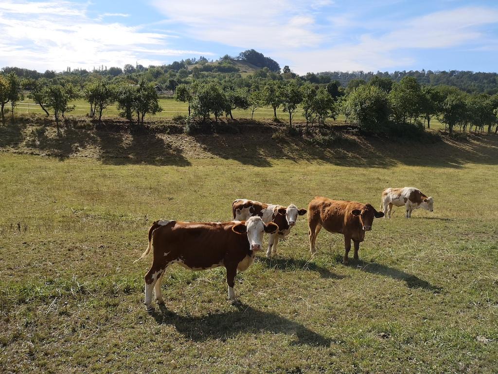 Die Kühe stehen idylisch auf der Wiese vor Zell am Ebersberg