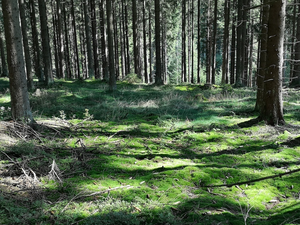 Frankenwald - Lebensgrundlage am Rennsteig