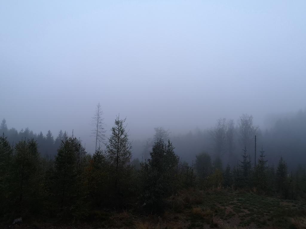 Morgennebel liegt über den Bäumen