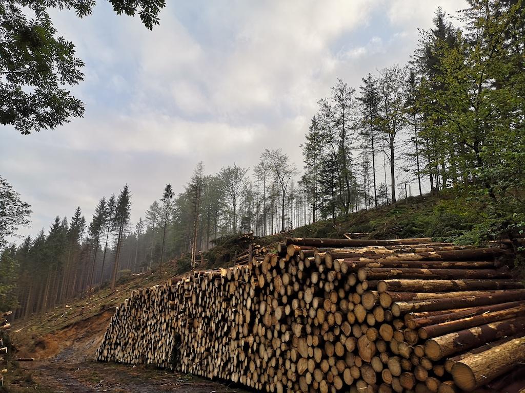 Waldrodung und jede Menge Holz