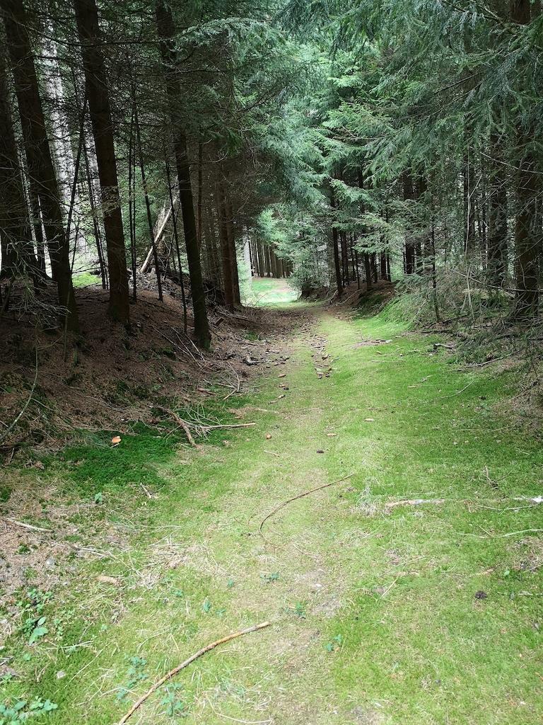 Der Ameisenweg führt auf weichen Boden sanft durch den Wald