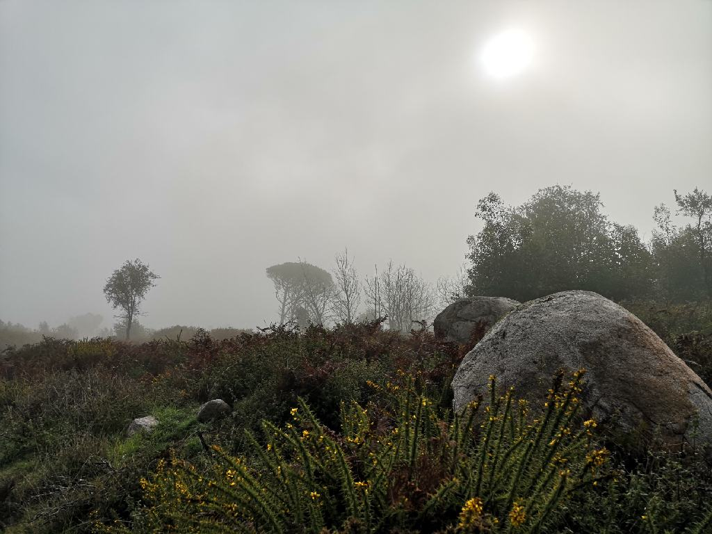 Nebel am Gipfel des Foia