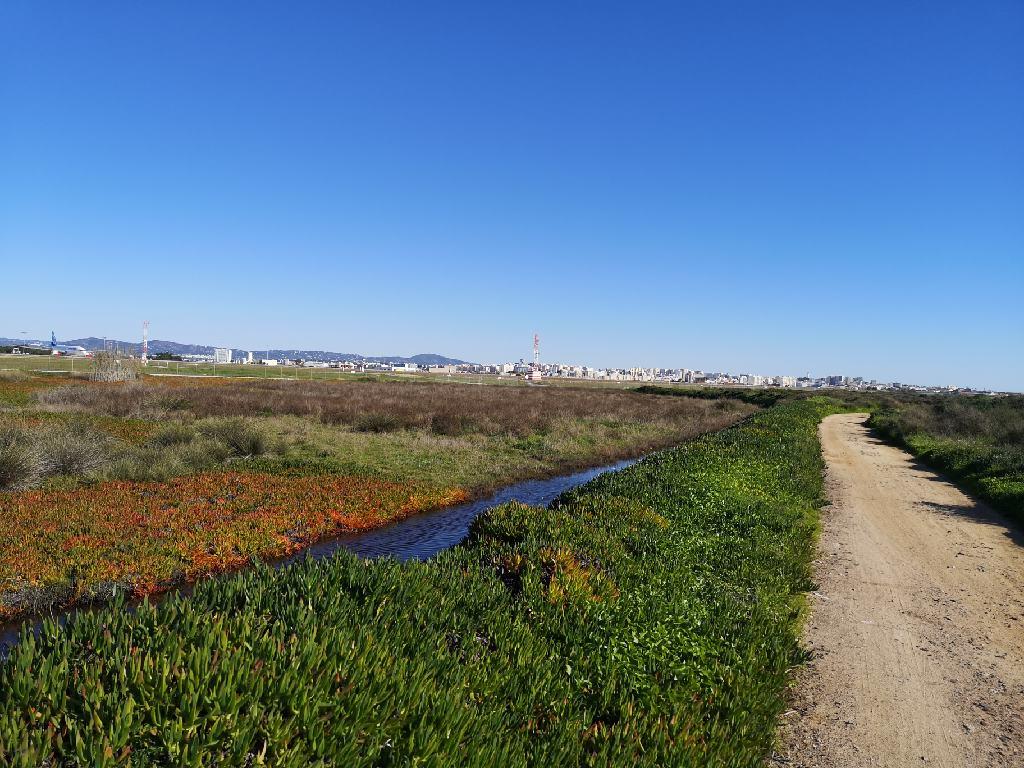 Naturschutzgebiet Rio Formosa am Flughafen Faro