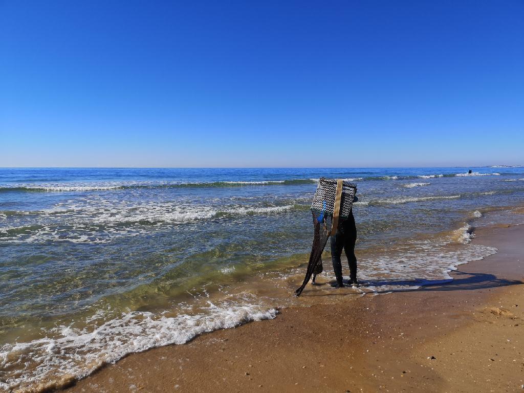 Muschelsammler am Meer