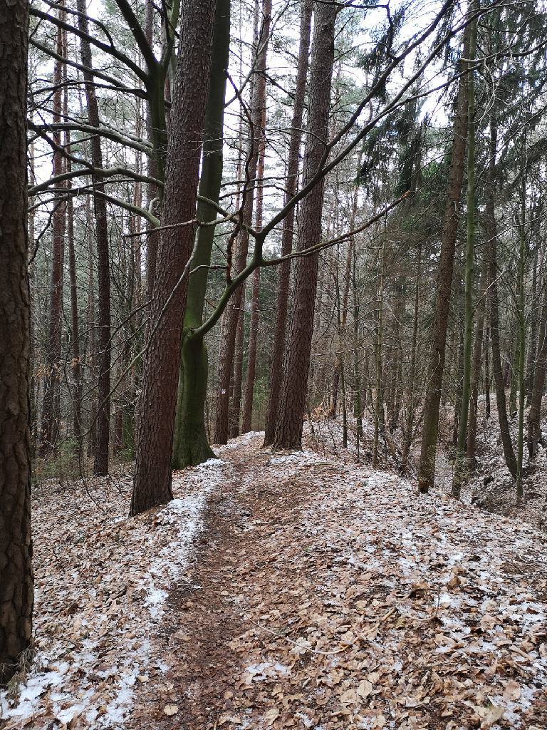 Noch liegt ein Hauch von Schnee auf dem Nonnenberg