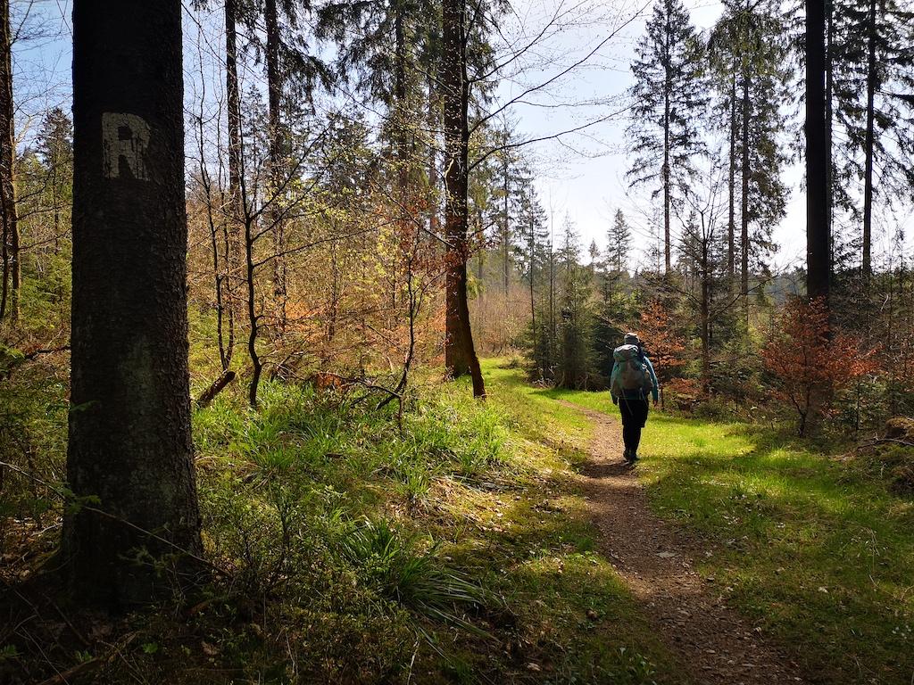 Wunderbarer Weg durch einen Mischwald