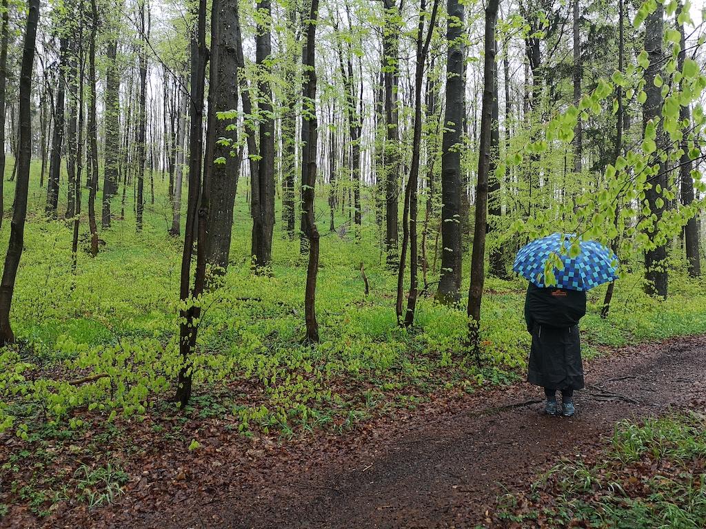 Regentag auf dem Rennsteig
