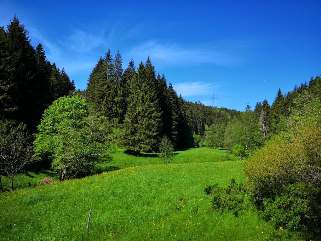 Der Weg durch das Böhlener Tal