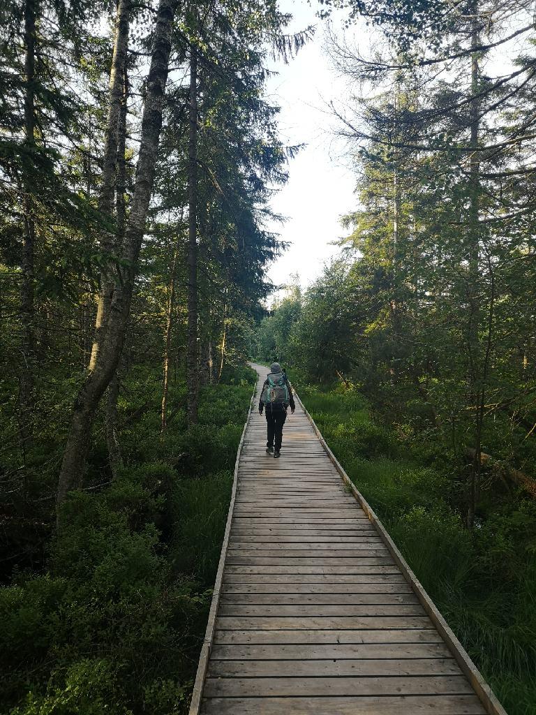 Bohlenweg durch das Wildseemoor